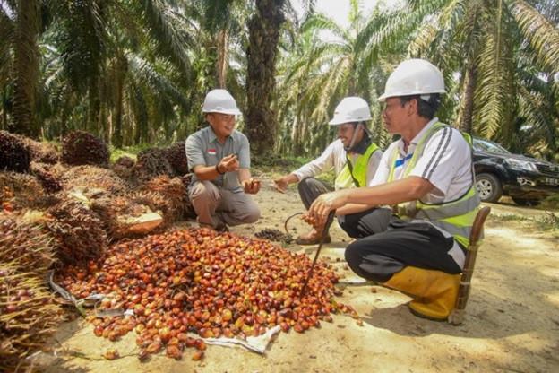 Petani Sawit Apresiasi 11 Pembeli Minyak Sawit Berkelanjutan